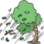 台風,竜巻,大雨,洪水,強風